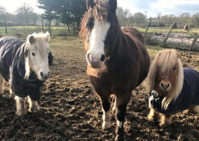 posing ponies!